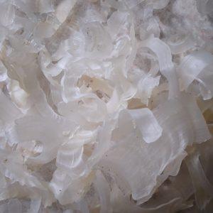 آخرین قیمت خرید کتیرا صدفی در بازار سال 1400